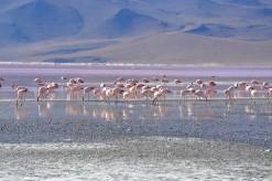 Lagune colorée (5)