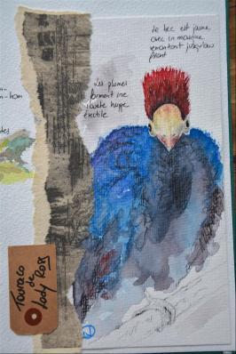 Carnet_Parc Oiseaux (5)
