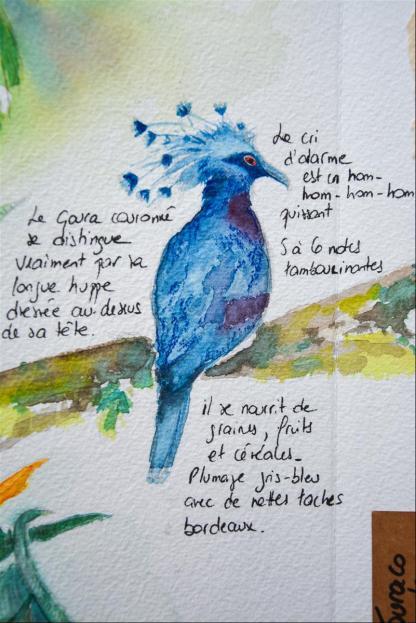 Carnet_Parc Oiseaux (6)