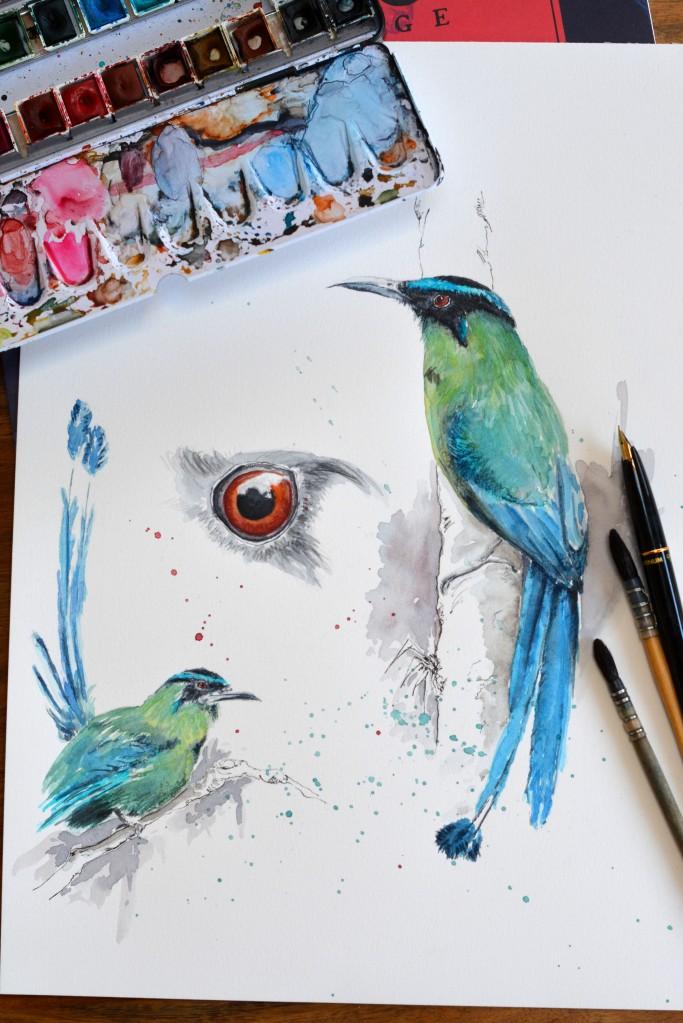 Motmot bleu